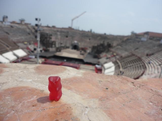 Bear in Verona