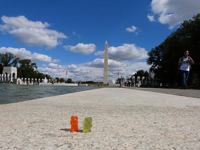 Bears in Washington DC