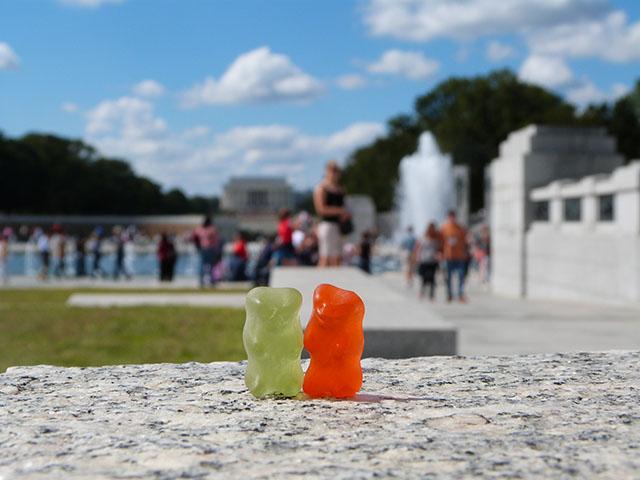 More Bears in Washington DC