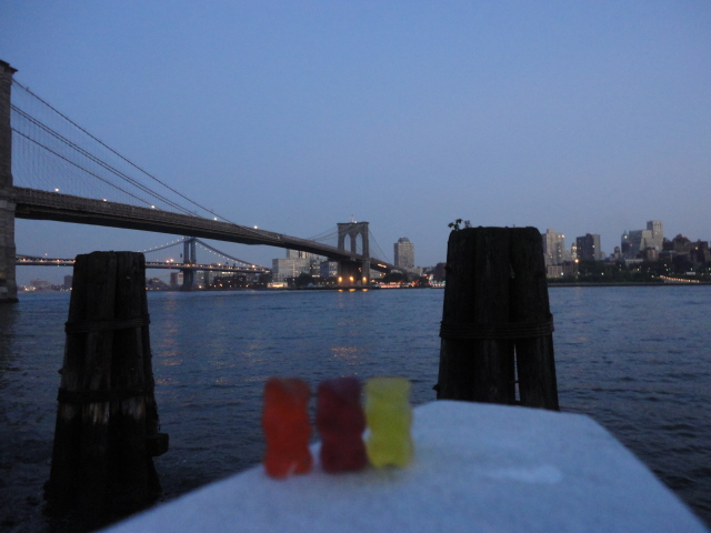 Bears in NYC Brooklyn Bridge