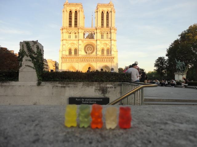 Paris - Bears outside Notre Dame