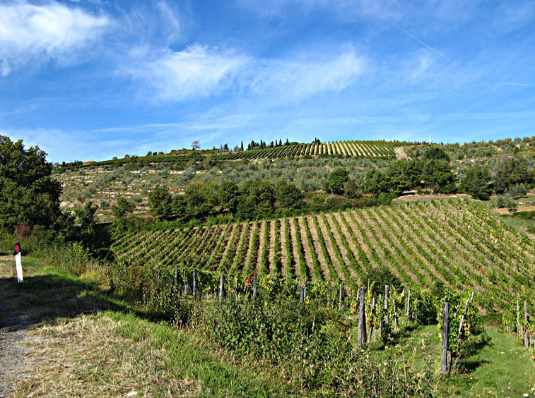 Chianti from Tuscany Pictures