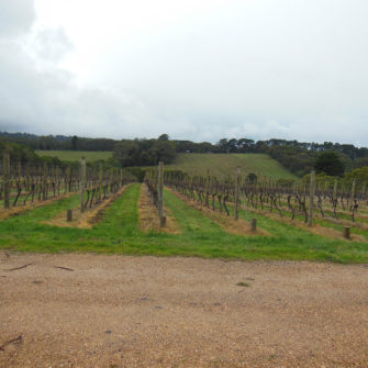 Vineyards Mornington Peninsula