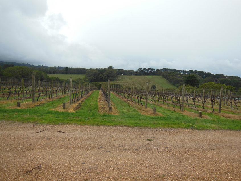 Vineyards Mornington Peninsula